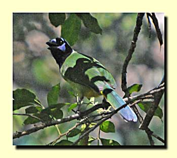 Birding Mexico With Rv Or Tent 17